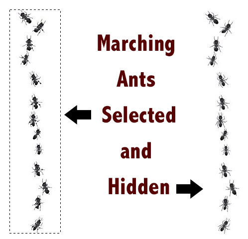 Photoshop Quick Tip: Hide or Turn Off the Marching Ants